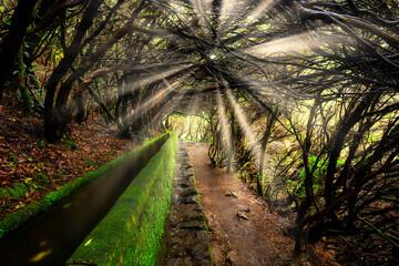 Landscape of madeira island - levada path