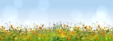 Panorama Of A Flower Meadow In Summer, 3d Rendering