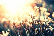 Beautiful Wild Flowers In Nature Macro.
