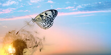 Beautiful Butterfly And Delicate Fluffy Dandelion At Sunset. Banner Design