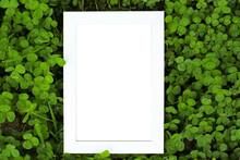 Blank White Wooden Frame On Clover Leaves Background