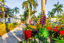 Downtown Street Sidewalk Path At Sunset In Naples, Florida With Potted Foxglove Digitalis Purple Flowers And Geranium Pots Outside Outdoors In Tropical Climate