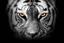 Tiger Face Profile , Animal Abstract