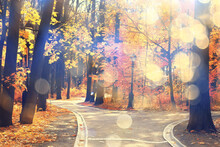 Autumn Landscape Background, Sun Rays In The Forest, Park, Trees Seasonal View October