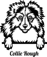 Collie Rough Peeking Dog - Head Isolated On White