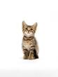 Leinwandbild Motiv kitten sitting on a white background