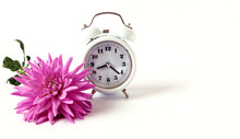 The Concept Of A Good Autumn Morning. A White Alarm Clock And A Pastel Dahlia Next To It On A Light Background, Close-up, Space For Text