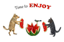 A Gray Cat And A Beige Dog Are Eating A Watermelon, Carved In The Shape Of A Flower. Time To Enjoy. White Background. Isolated.