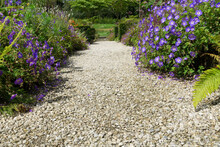 Stony Wide Path Leading Between Flowers And Garden