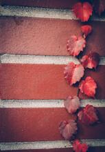 Red Vine On Brick Wall