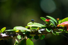 Insect On A Branch, Insect Resting On A Branch With Flowers In Its Natural Environment