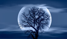 """Lone Dead Tree With Super Full Blue Moon, Amazing Clouds In The Background """"Elements Of This Image Furnished By NASA"""""""