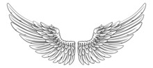 Spread Pair Of Angel Or Eagle Feather Wings