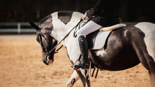 A Piebald Black And White Horse With A Rider In A Leather Saddle Performs At Dressage Competitions On A Sunny Day. Equestrian Sports. Horse Riding.