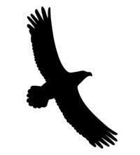 Eagle Flying. Vector Black Drawing Silhouette Image.