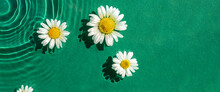 Chamomile Flowers On Green Water Under Sunlight. Top View, Flat Lay
