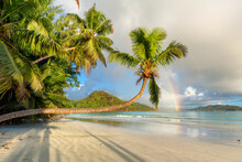Tropical Beach At Sunrise. Palm Trees On The Beach At Sunrise In Tropical Island, Praslin, Seychelles.