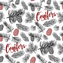 Hand Drawn Design Vector Elements. Seamless Pattern. Forest Collection Of Coniferous Branches And Pine Cones Isolated On White Background. Fir Cone Sketch.