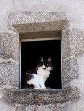 Chat Perché à La Fenêtre