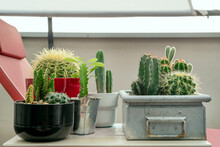 Assorted Cactus Pots On A Table In An Urban Terrace