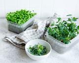 Fototapeta Kawa jest smaczna - Assortment of micro greens on wooden table