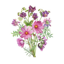 Bouquet With Field Geranium, Cosmea, Clover, Comfrey Flowers. Watercolor Hand Drawn Painting Illustration Isolated On White Background