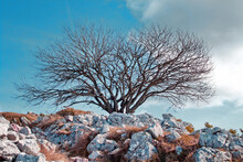 Bare Tree Behind The Rocks On A Hill