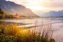 Flowers, Swiss Alps, Lake, Montreux, Switzerland