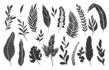 Silhouettes Tropical Leaves. Monochrome Glyph Forest Palm Monstera Fern Hawaiian Leaves. Set Tropical Elements Vector Illustration.