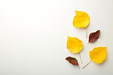 Autumn Composition. Autumn Leaves On White Background