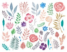 Watercolor Flowers And Foliage Hand Painted, Isolated On White Background