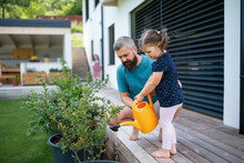 Father And Small Daughter Outdoors In Tha Backyard, Watering Plants.