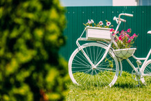 Decorative Retro Vintage Model Bicycle Equipped Basket Flowers Garden On Background Of Green Fence. Summer Flower Bed With Petunias. Landscaping, Garden Decor. Close Up, Detail