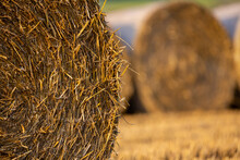 Straw Bales In A Freshly Mowed Field. Good Lighting Conditions, Made In The Late Afternoon