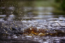 Splash On Water Surface Background Brown, Dark Water Nature Abstract