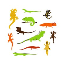 Set Of Different Color Wild Lizards, Chameleons And Other Animals Reptiles.