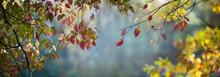 Autumn Leaves In The Forest On A Blurred Background Of Trees And A Pond. Colorful Foliage In The Autumn Park. Excellent Background On The Theme Of Autumn. Panoramic View.