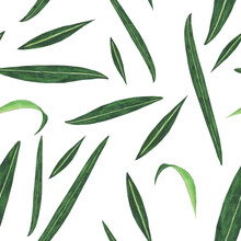 Seamless Pattern Of Fireweed Leaves On White Background. Watercolor Hand Drawing Illustration. Chamaenerion Angustifolium.