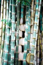 Folhas E Bambu