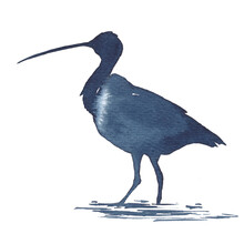Watercolor Illustration Of The Silhouette Of Sandpiper, Snipe In Blue Tones On A White Background