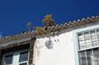 canvas print picture - Natürliche Dachbegrünung auf La Palma, Kanarische Inseln