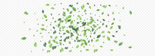 Mint Greenery Abstract Vector Panoramic