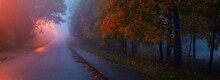 An Empty Illuminated Country Asphalt Road Through The Trees And Village In A Fog On A Rainy Autumn Day, Street Lanterns Close-up, Red Light. Road Trip, Transportation, Communications, Driving