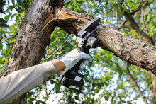Hand Holds Light Chain Saw With Battery To Trim Broken Branch Of An Apple Tree