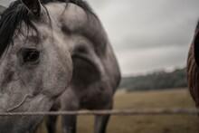 Pferde Details