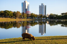Buildings With Lake Reflection In Mato Grosso Do Sul
