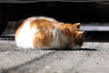 背中を向けて日向ぼっこしている三毛猫