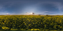 360 Seamless Hdri Panorama View  Among Rapeseed Canola Colza Fields In Spring Evening With Blue Sky In Equirectangular Spherical Projection, Ready AR VR Virtual Reality Content