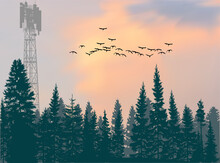 Antenna Tower Silhouette In Green Forest At Orange Sky