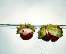 Conkers Chestnuts Floating
